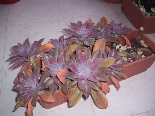 Garptoveria Fred İves